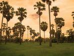 Reis unter Palmen