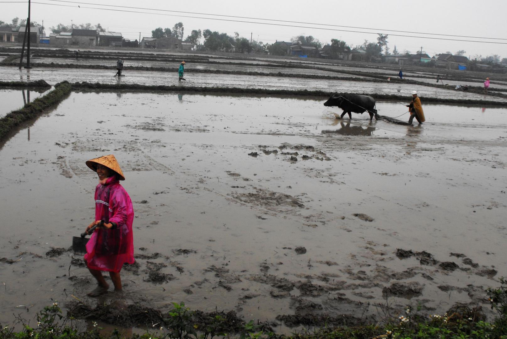 Reisbauern im Januar