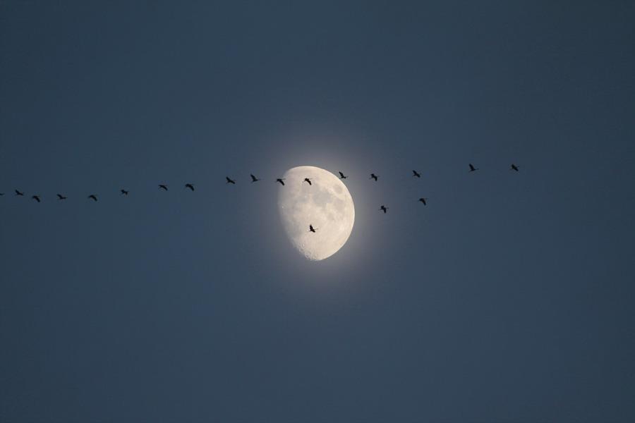 Reise zum Mond 2