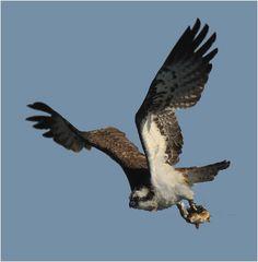 Reisedienst Adler