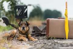 Reisender Hund