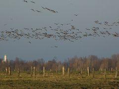 Reisesaison der Zugvögel