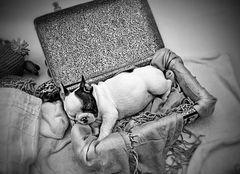 Reiseträume