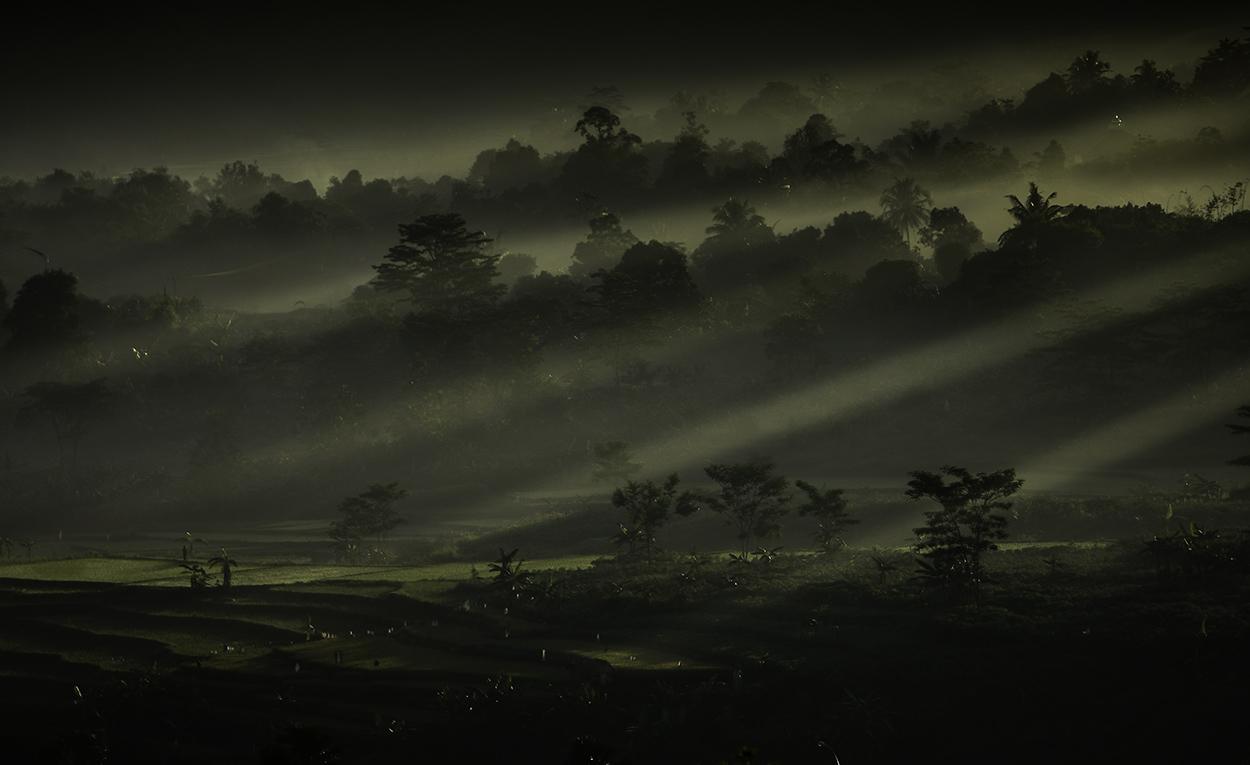 Reisfelder am Morgen