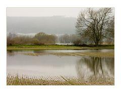 Reisfelder in Deutschland... ?