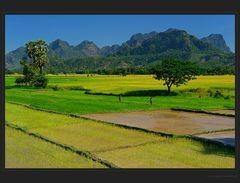 Reisfelder und Kalksteinberge