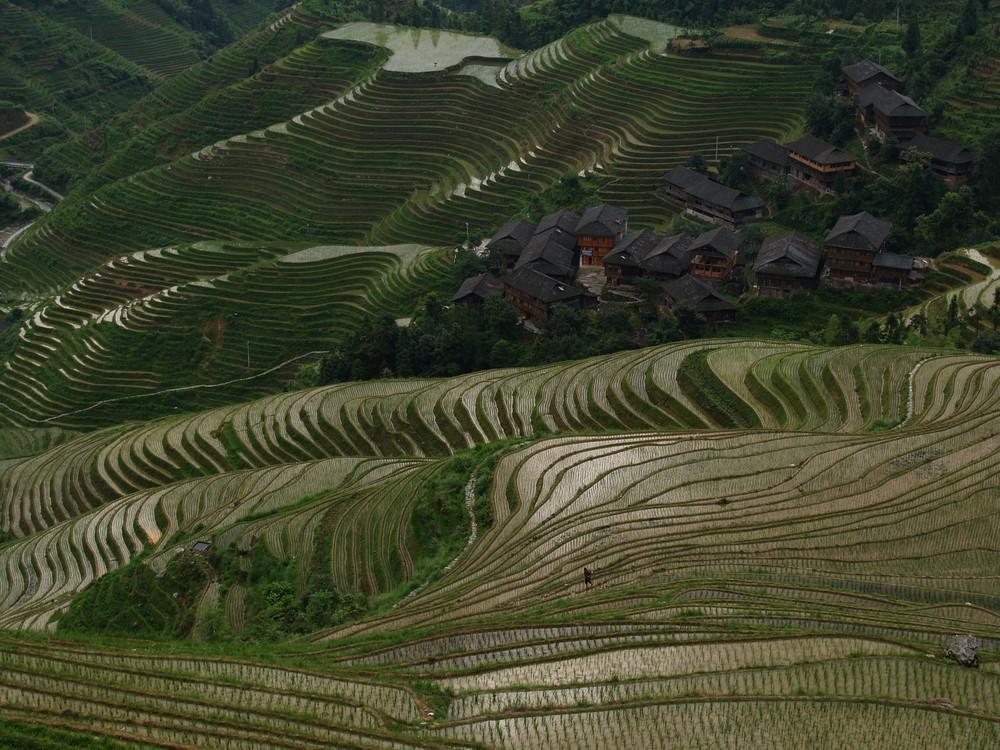 Reisfeldterrassen mit Bauerndorf, Longsheng, China