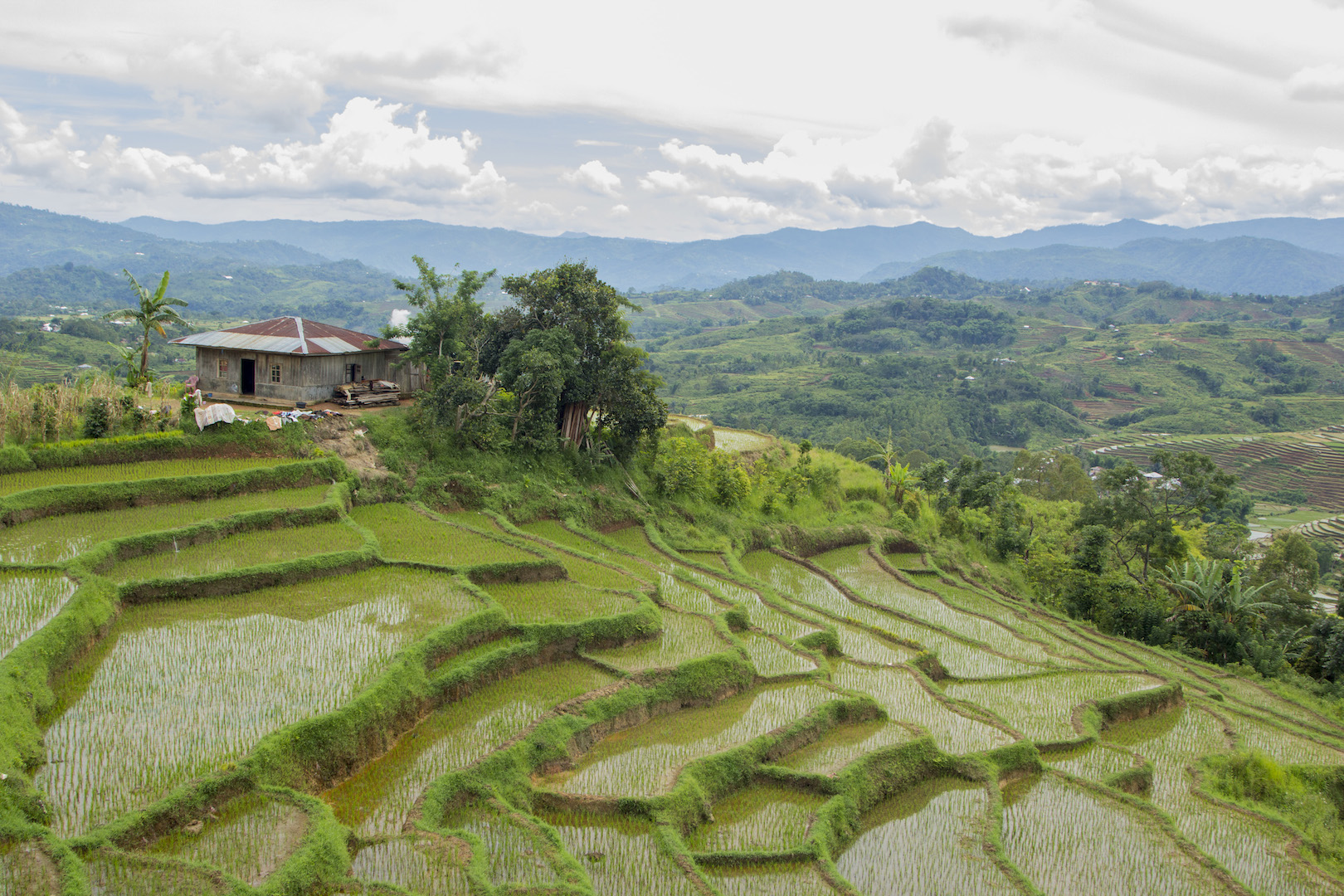 Reisterrasen in Ruteng insel Flores Indonesien