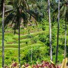Reisterrasse auf Bali
