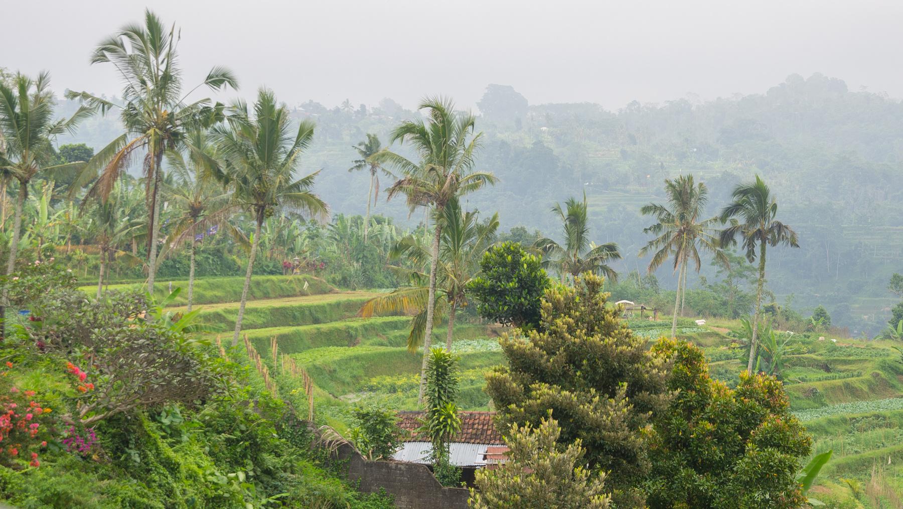 Reisterrasse im Hinterland von Bali