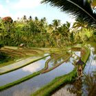 Reisterrassen - Bali