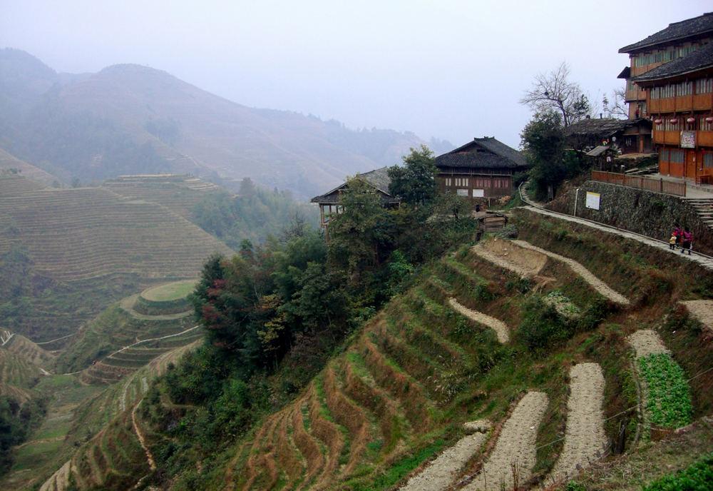 Reisterrassen bei Longsheng Bild 4
