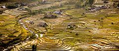 Reisterrassen in Nordvietnam