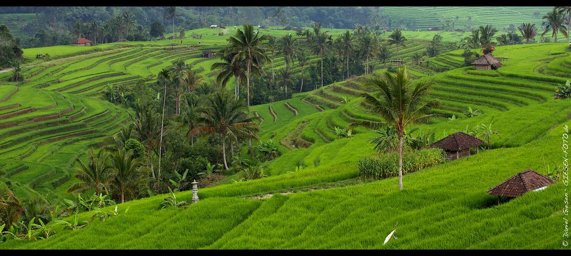 Reisterrassen von Bali, Indonesien 2012