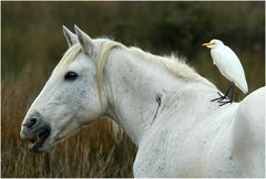 Reiter mit Pferd