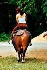 Reiterin auf Rind