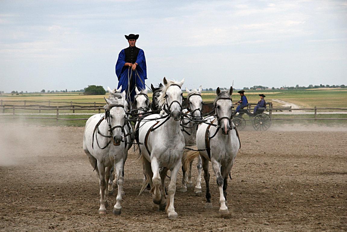 Reitershow in der Puszta