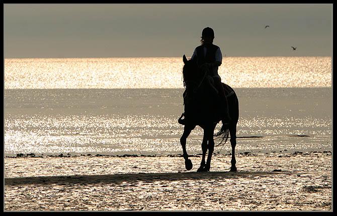 Reiterträume