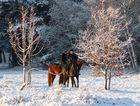 Reitpause in der Wintersonne