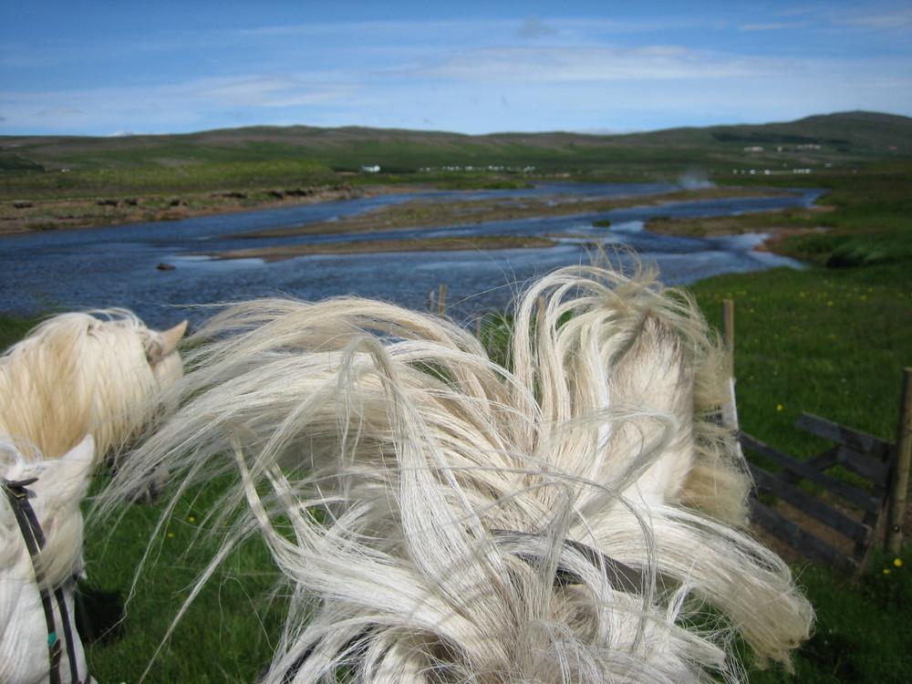 Reitweg auf Island