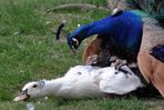 Relaod wegen Wechsel von Akt zu Tierfreundschaften...;-)))