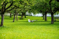 Relaxen