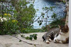 Relaxen in der Cala Figuera