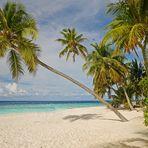 Relaxen unter Palmen - Leider virtuell  -