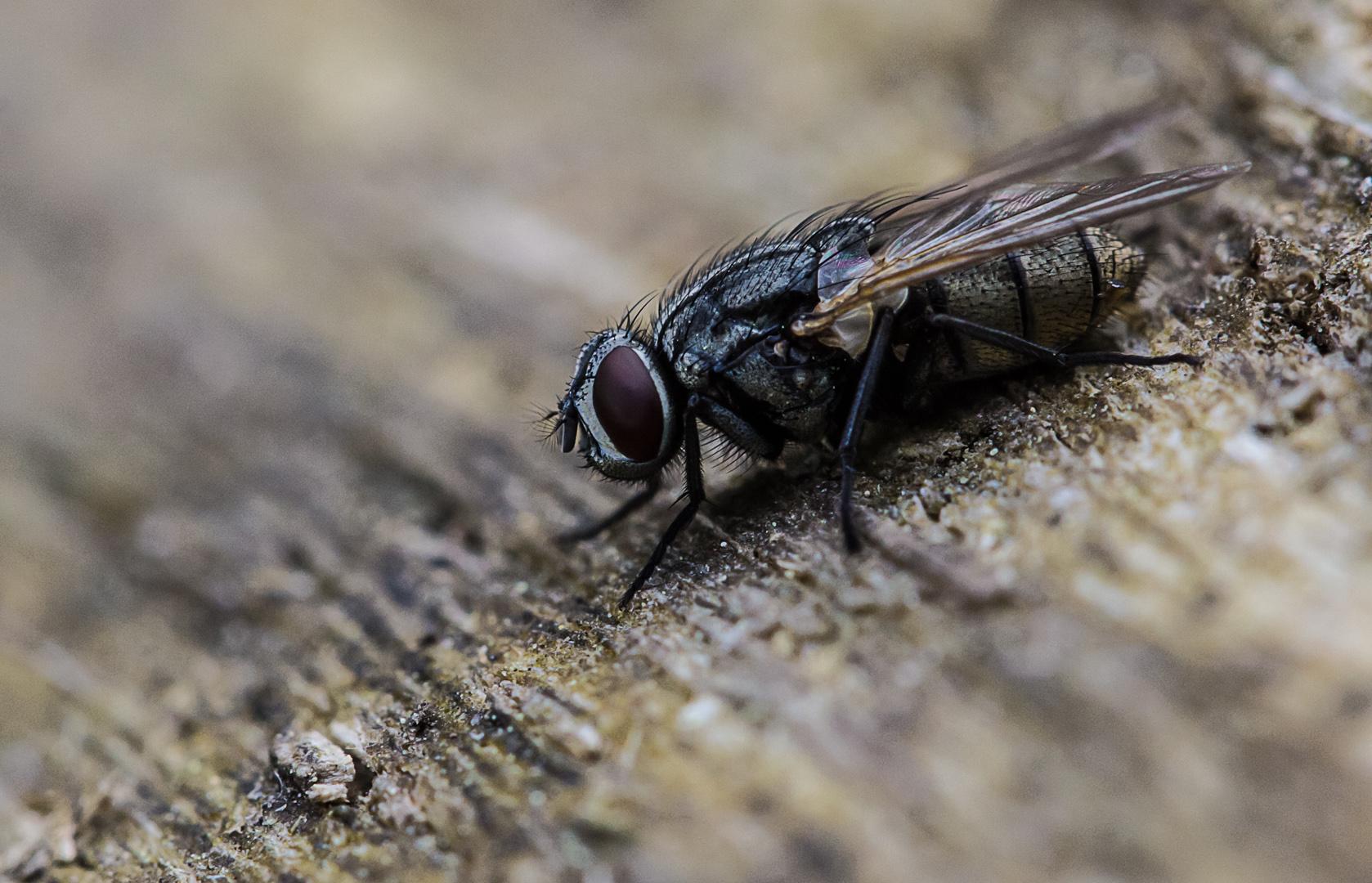 relaxing Fliege