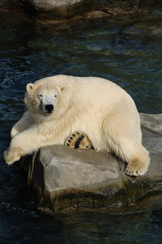 relaxter Bär