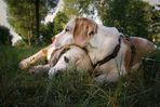 Reload: Beagle - altes Brautpaar - ___oOOo_°(_)°_oOOo___