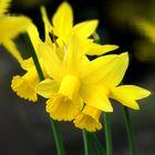 ... remembering last spring