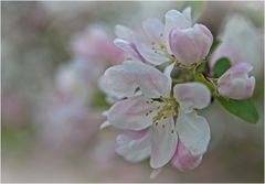 Reminiszenz an das Frühjahr