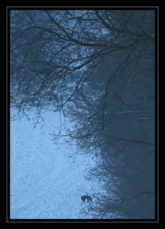 Renard hivernale