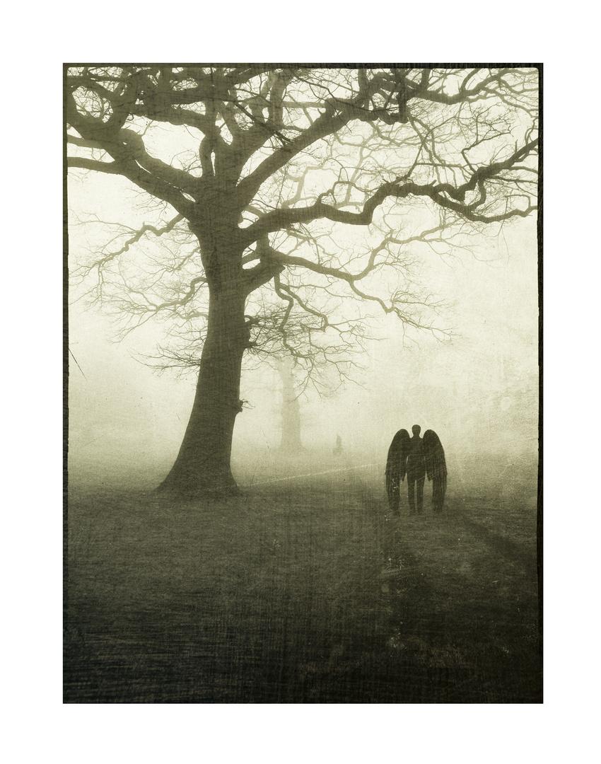 Rencontre dans le brouillard
