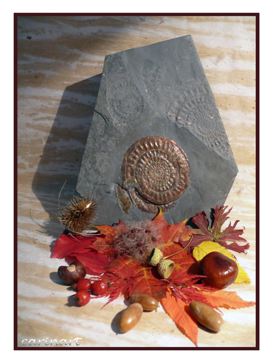 Rencontre d'automne / Begegnung im Herbst