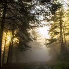 Rencontre entre le brouillard et le soleil