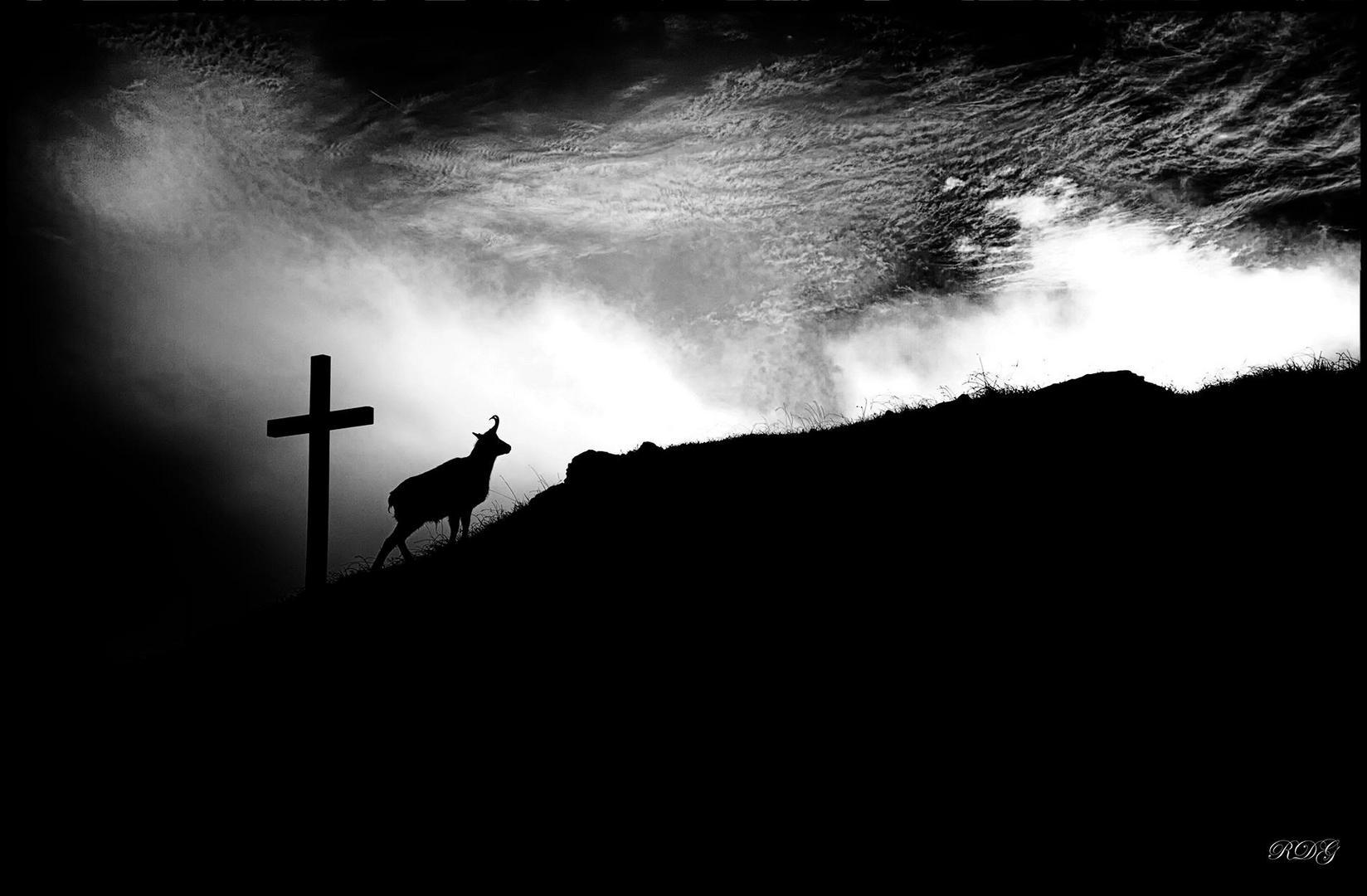 rencontre matinale  sur un des sommets du Jura