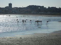 Rencontre sur l'étang de Thau, cet après midi ...