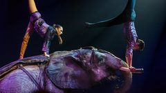 RENE CASSELLY - Elefanten als Zirkusstars