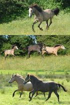 Rennpferde
