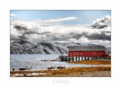 Rentiere in Talvik / Finnmark