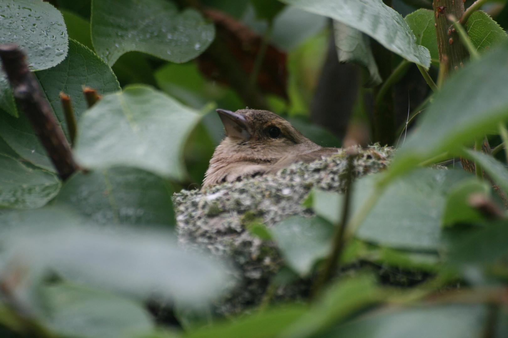 repos au nid