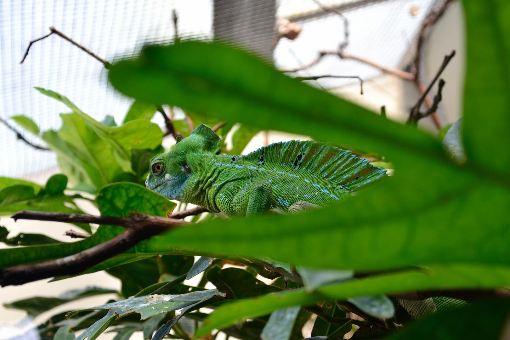 Reptil (Stuttgarter Zoo)