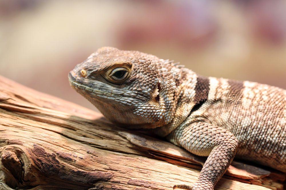 Reptilien Amphibien