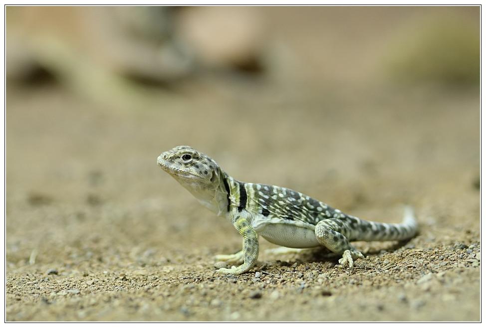 Reptilium, unbekannte Spezies #2
