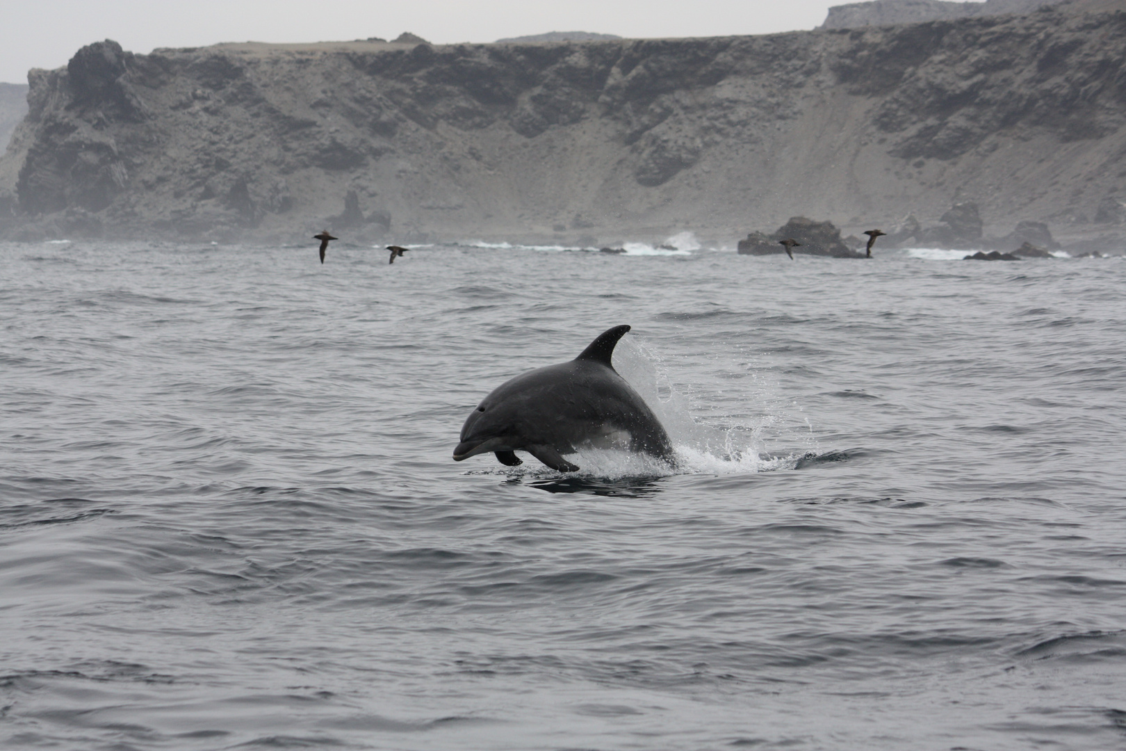 Reserva Nacional Pingüino de Humboldt...