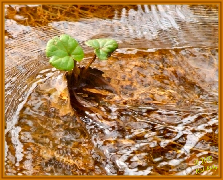 Resisting the flow of nature...