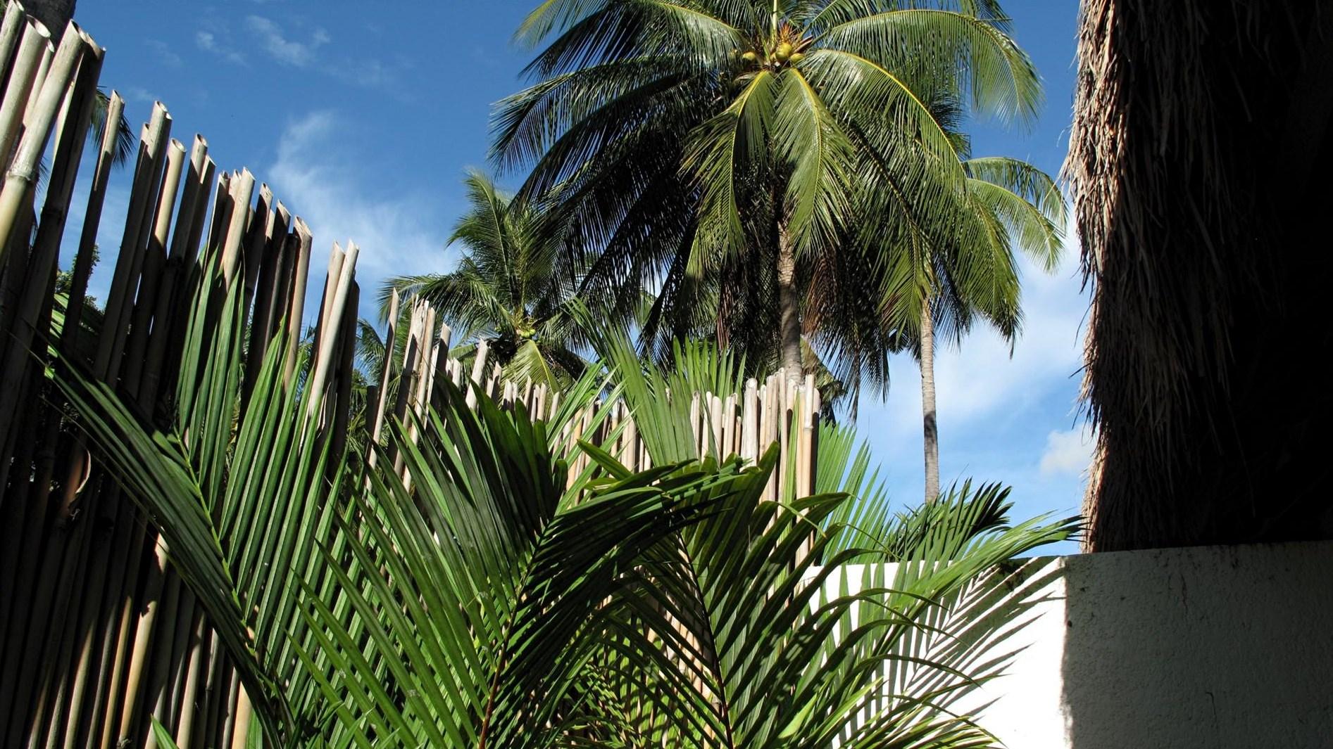 Resort auf Negros - 2