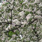 respiro della primavera